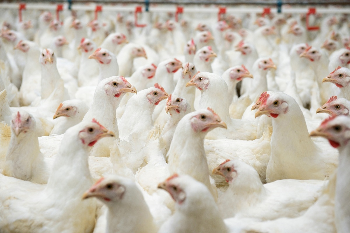 La so le est trucioli per allevamenti avicoli trucioli for Ccnl legno e arredamento piccola e media industria